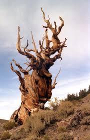 Decision Tree image